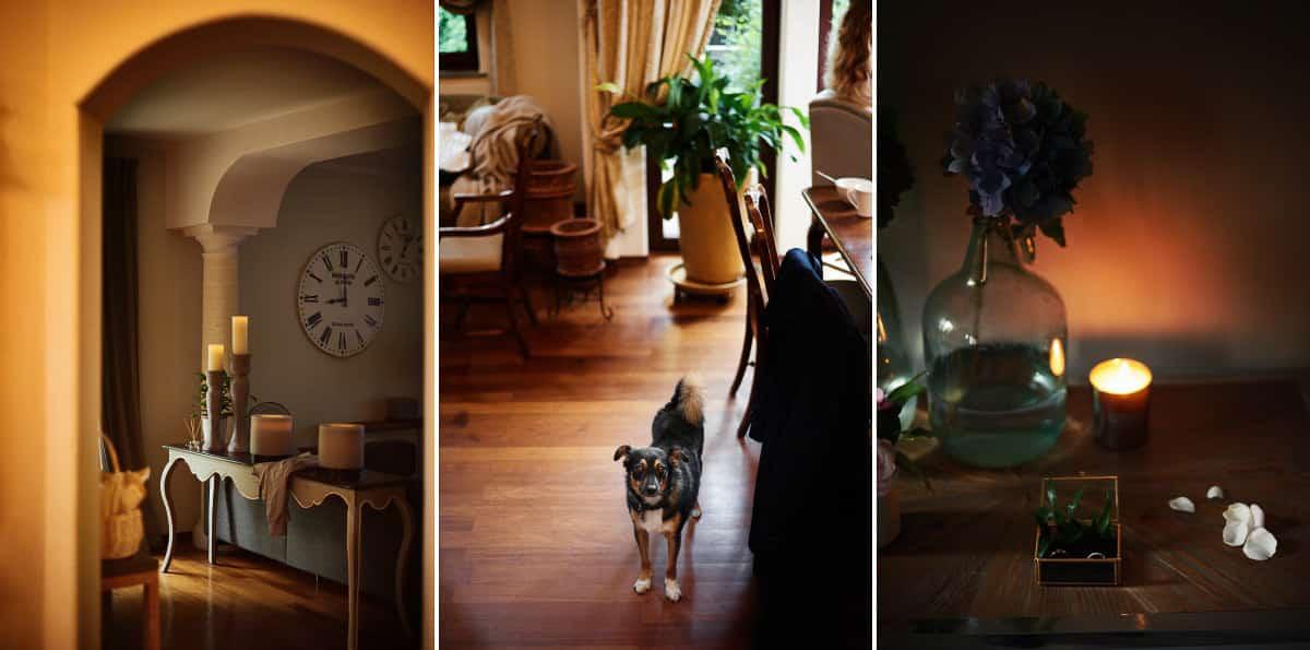 fotograf kraków pies w domu na przygotowaniach